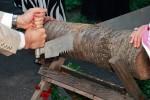 Holzsägen als Hochzeitsspiel